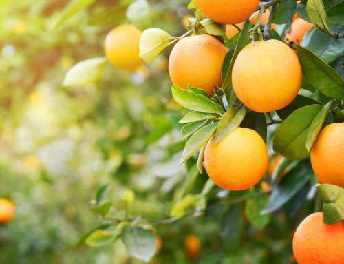 ISO 9001 certification supporting the US Citrus Industry