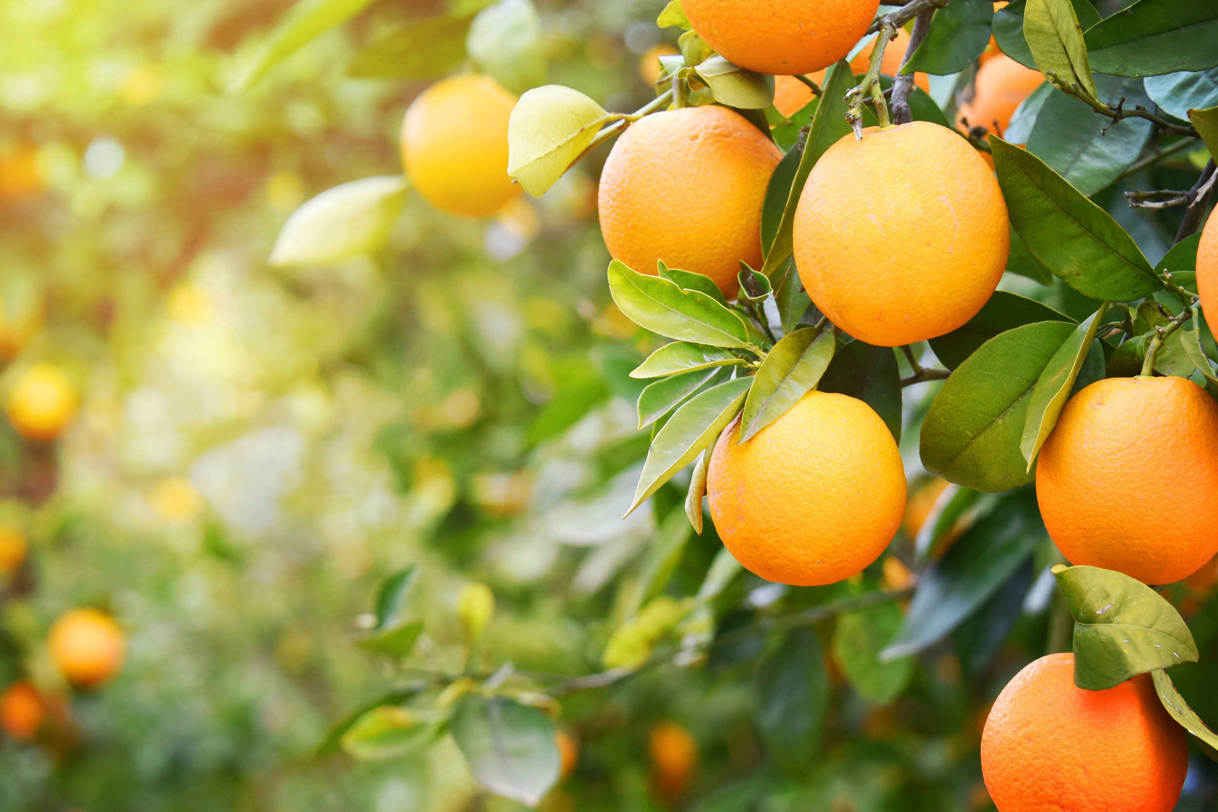 ISO 9001 certification in practice orange grove